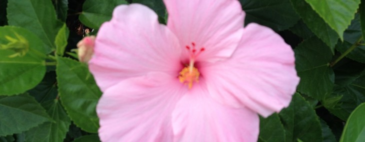 Among Women 184: Show Me, Lord, That I'm Beautiful