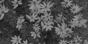 Flowers from Pat Gohn's Garden