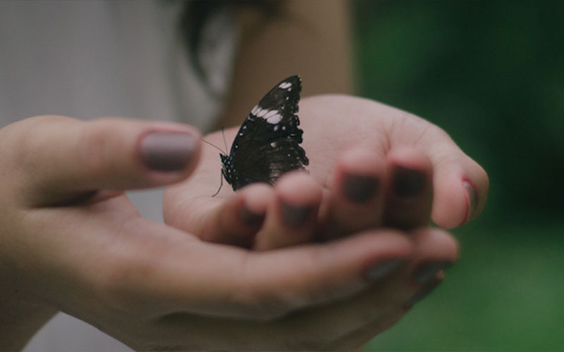 Girl holding butterfly in her hand